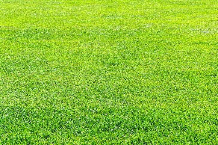 Grass Free Photo