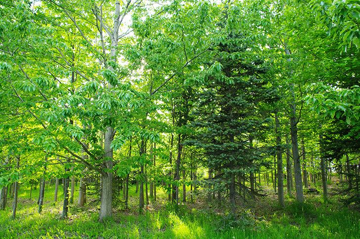 木の商用利用可能なフリー写真素材