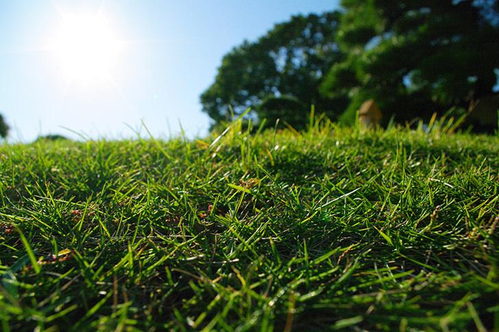 Lawn Free Photo