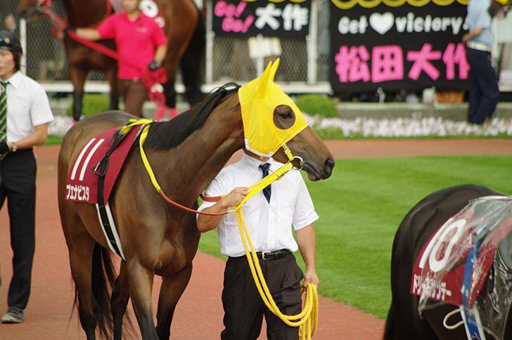 競争馬(ブエナビスタ)の商用利用可能なフリー写真素材