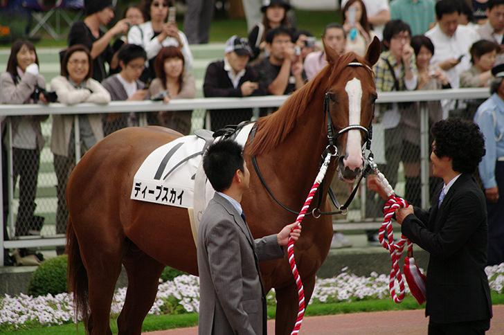 競争馬(ディープスカイ)の商用利用可能なフリー写真素材