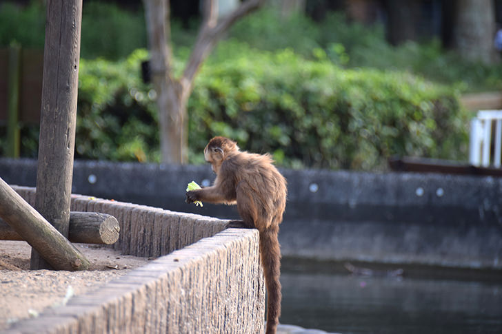 Monkey Free Photo