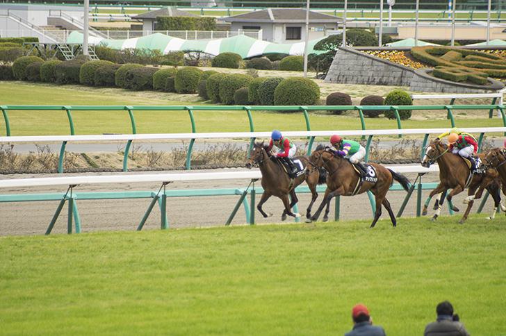 競馬の商用利用可能なフリー写真素材