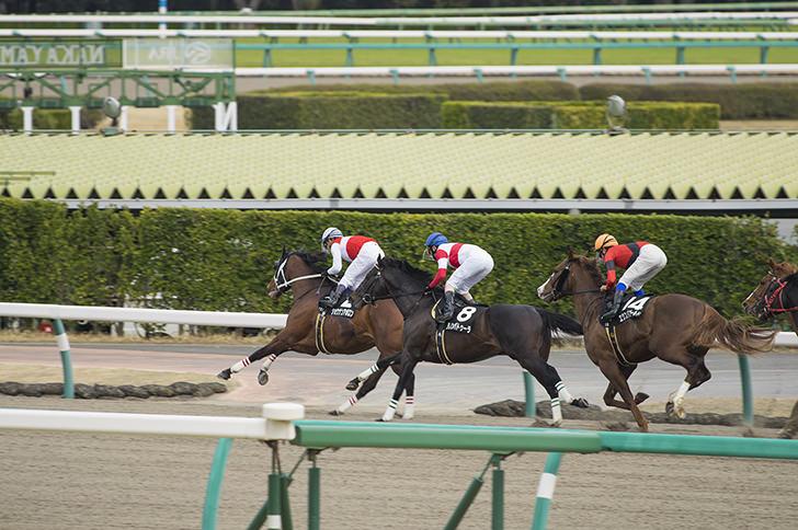 Horse race Free Photo