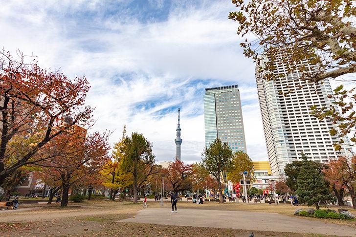 錦糸公園から見えるスカイツリーの商用利用可能なフリー写真素材