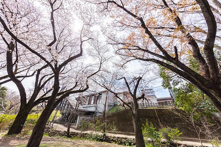 Inogashira Park Station Free Photo