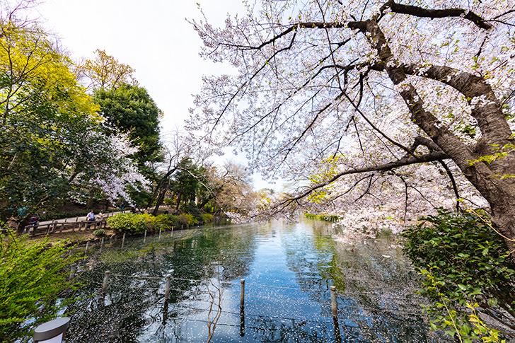 Inogashira Park Free Photo