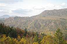 紅葉のフリー写真素材