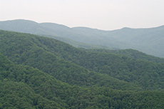 森のフリー写真素材