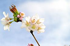 春風にゆらぐふんわりツヤ髪を手に入れて、お花見に出かけよう!