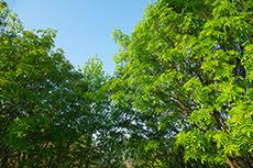 林のフリー写真素材