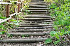丸太階段のフリー写真素材