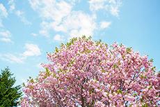 植物のフリー写真素材