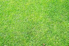 芝生・芝のフリー写真素材