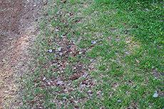 土と草のフリー写真素材