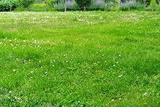 公園のフリー写真素材