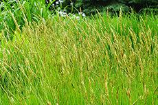 草のフリー写真素材