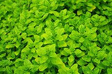 葉のフリー写真素材