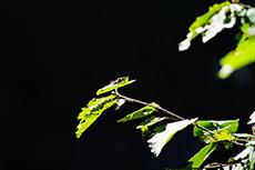 昆虫のフリー写真素材