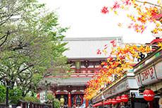 浅草寺のフリー写真素材