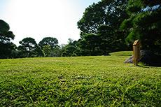 清澄庭園-芝生-のフリー写真素材