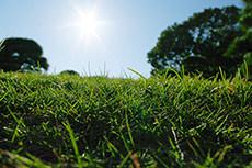 芝生と太陽のフリー写真素材