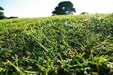 芝生のフリー写真素材