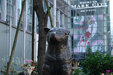 ハチ公前広場(渋谷)のフリー写真素材