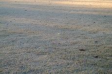 枯れ気味の芝生のフリー写真素材