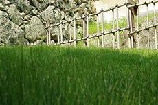 芝生と石垣のフリー写真素材