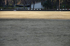 日比谷公園のフリー写真素材