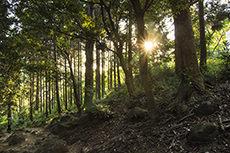 筑波山のフリー写真素材