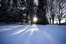 雪と木と太陽のフリー写真素材