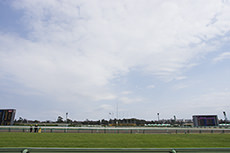 中山競馬場のターフコースのフリー写真素材