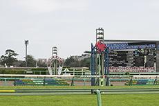 中山競馬場ゴール前のフリー写真素材