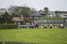 競馬のスターティングゲートのフリー写真素材