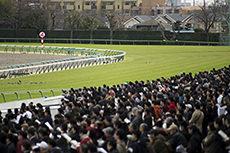 中山競馬場第4コーナーのフリー写真素材