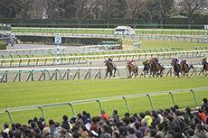 競馬のフリー写真素材