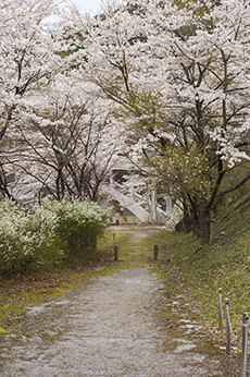 Watarase Park