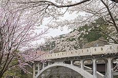 Watarase Bridge