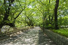 遊歩道のフリー写真素材